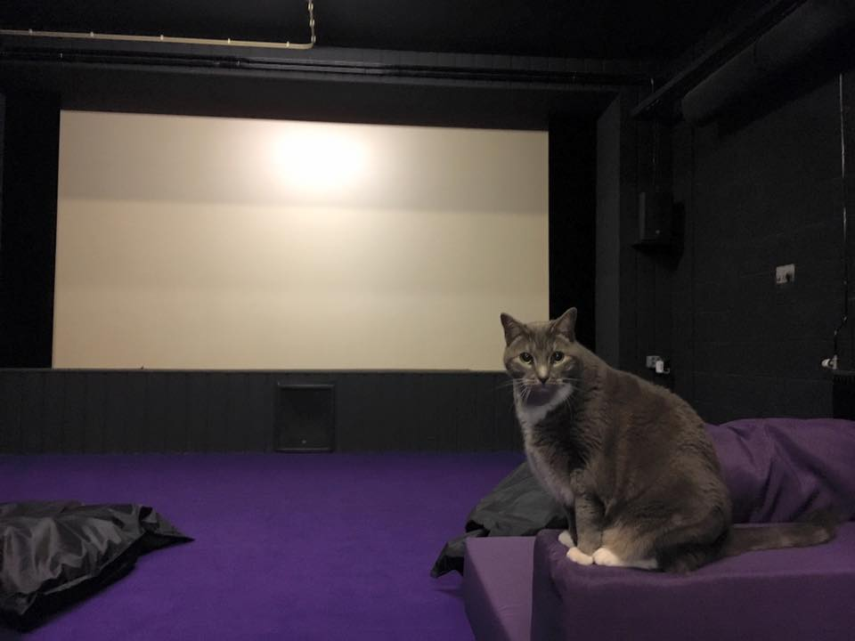 echo | cinema cat